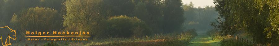 Motive-in-der-Natur-finden-und-gestalten-Workshop-Holger-Hackenjos-Naturfotografie